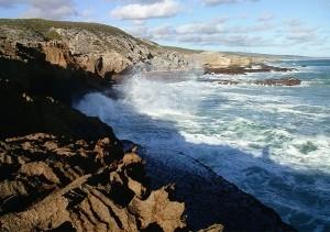 Whale Trail Sea